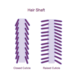 hair-cuticles-297x297